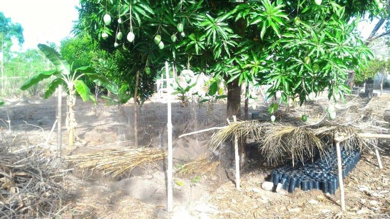 """BENIN, Projet De """" Scolarisation Assistée Par L'agro-écologie"""""""